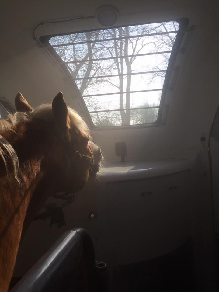 Pferdeinhalation in der mobilen Solekammer