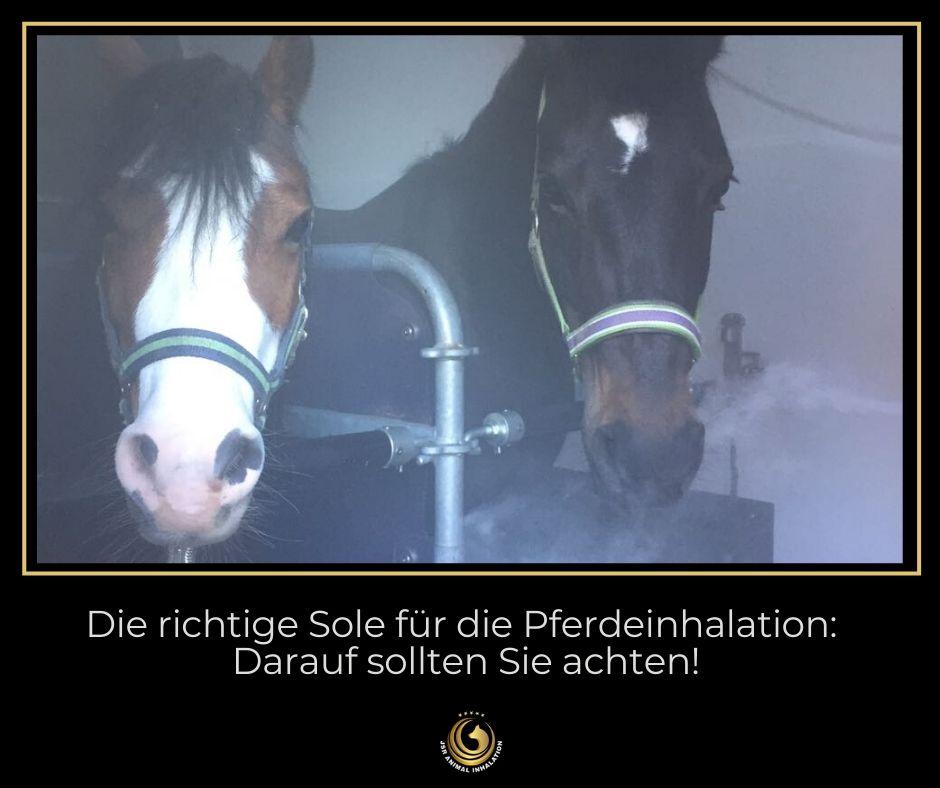 Die richtige Sole für die Pferdeinhalation kaufen