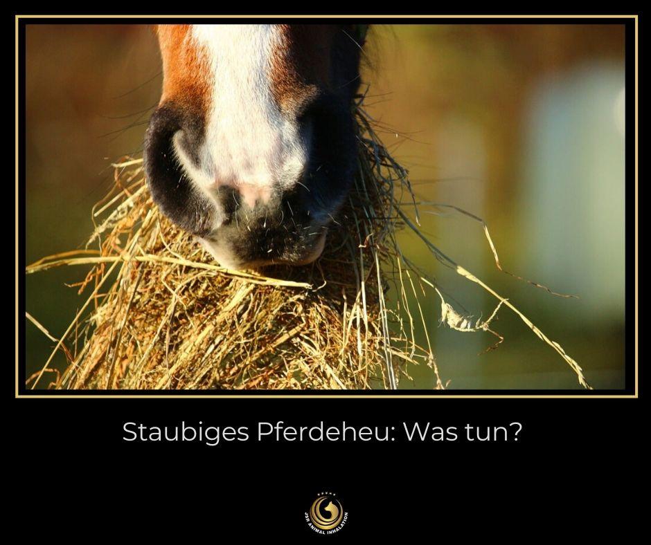 Was tun bei staubigem Pferdeheu