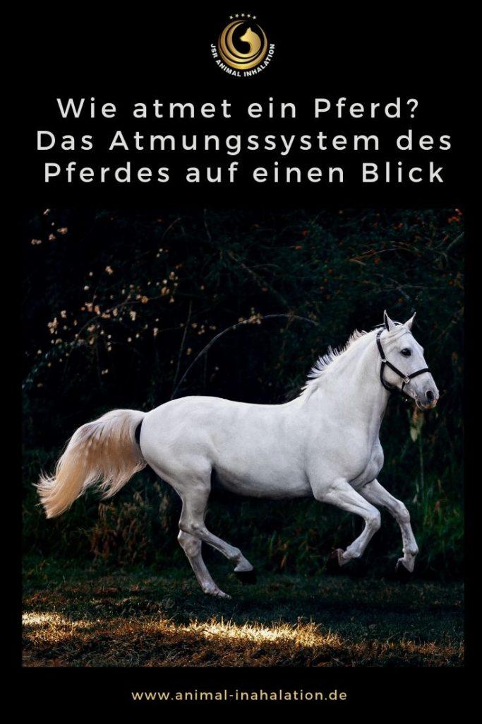 Das Atemsystem des Pferdes erklärt