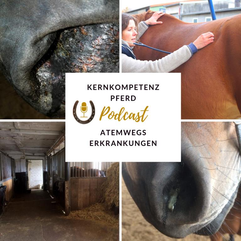 Kernkompetenz Pferd Podcast Atemwegserkrankungen