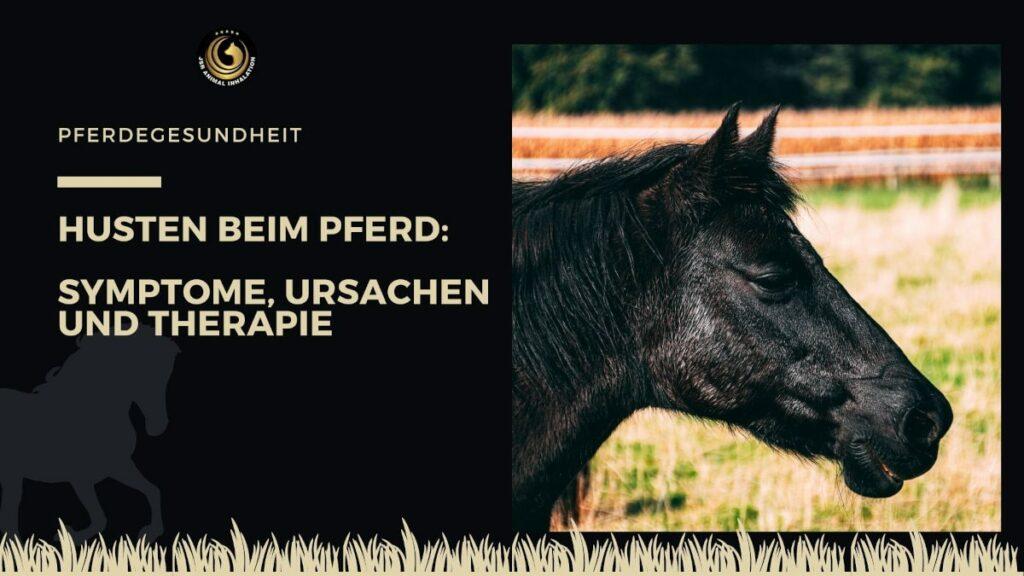 Ursachen Symptome und Therapie bei Husten beim Pferd