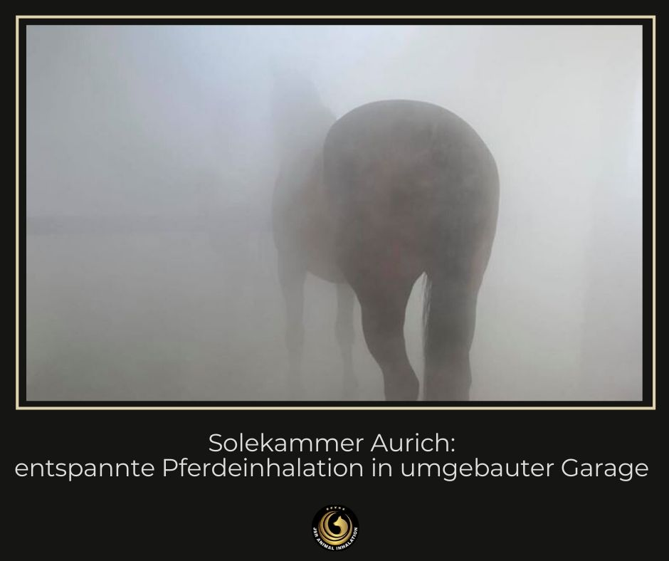 Entspannte Pferdeinhalation in der Solekammer Aurich
