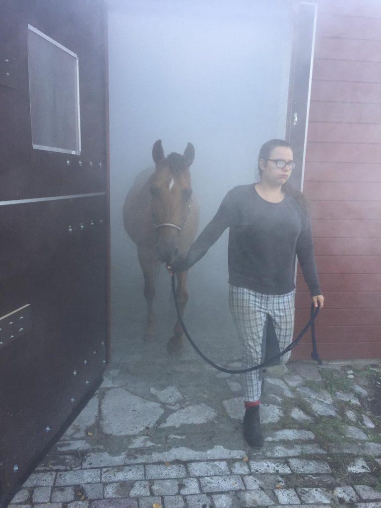 Nach der Pferdeinhalation in der Solekammer Aurich