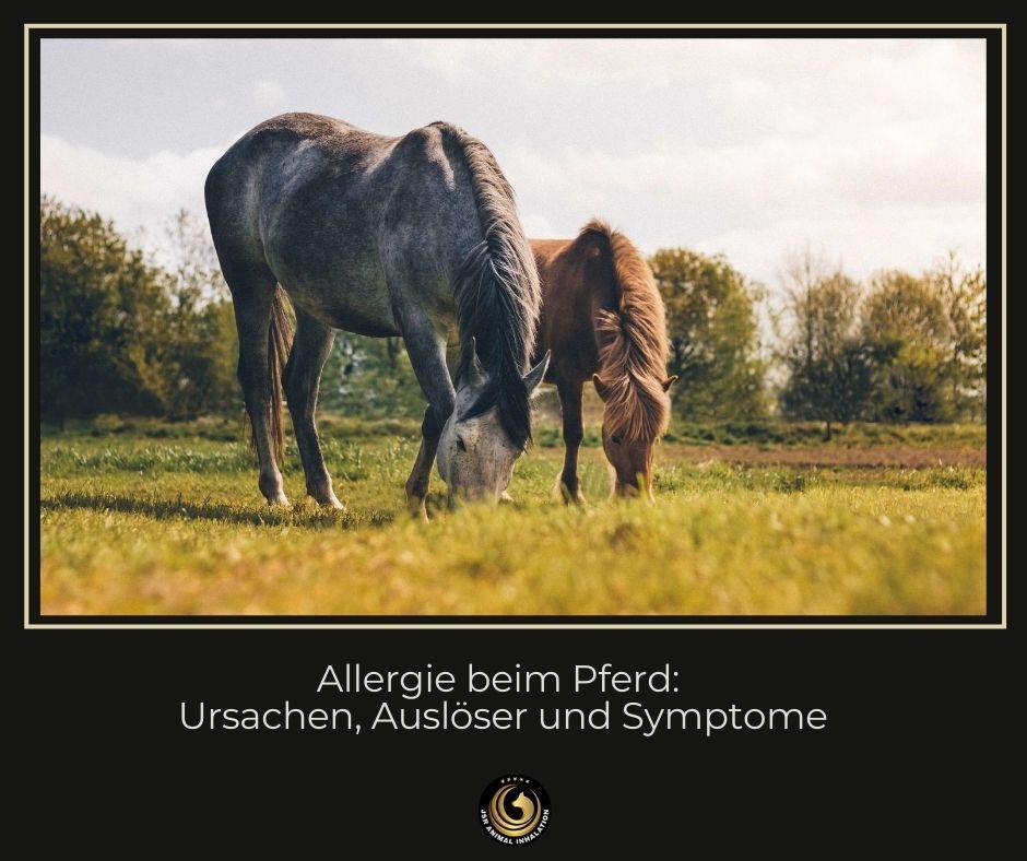 Allergie beim Pferd
