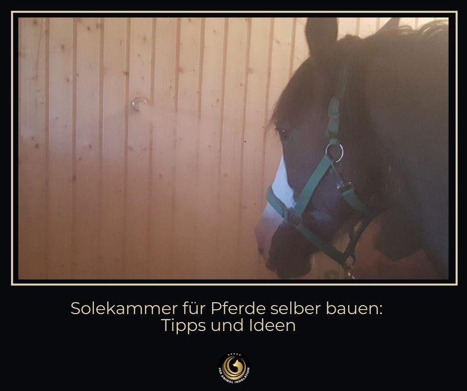 Solekammer für Pferde selber bauen