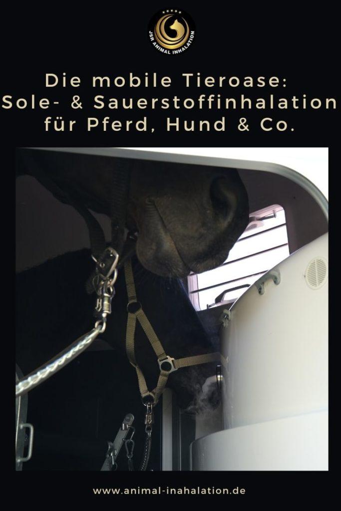 Sole und Sauerstoffinhalation für Pferd und Hund bei Die mobile Tieroase
