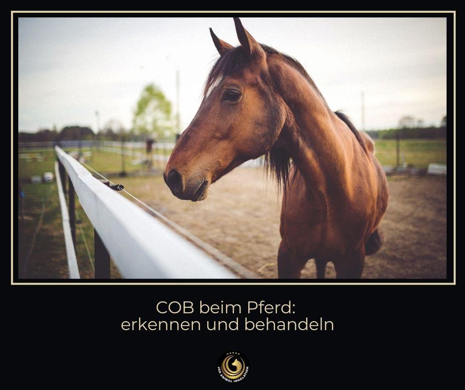 COB beim Pferd erkennen und behandeln