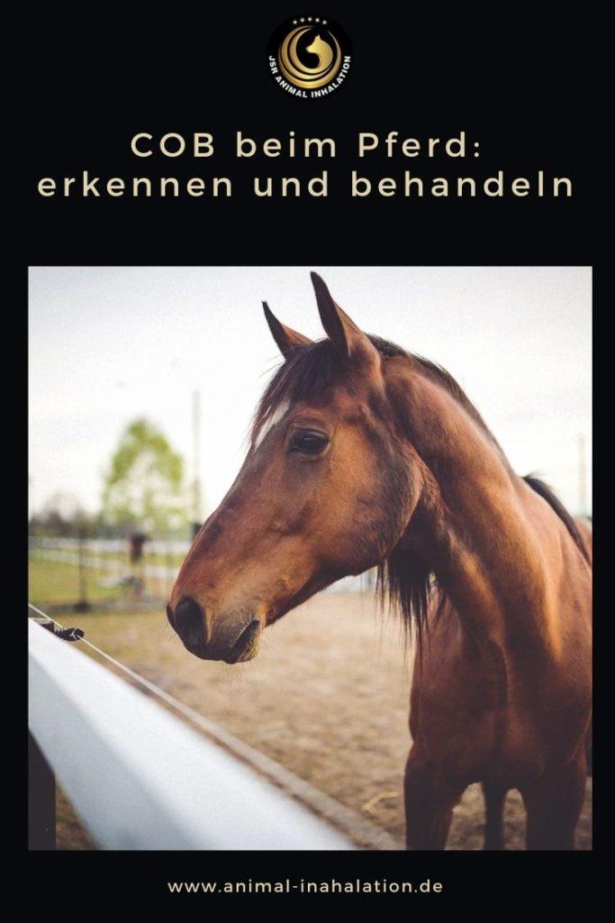 Chronisch obstruktive Bronchitits beim Pferd