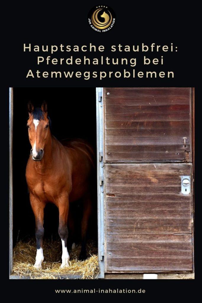 Hauptsache staubfrei: Pferdehaltung bei Atemwegsproblemen