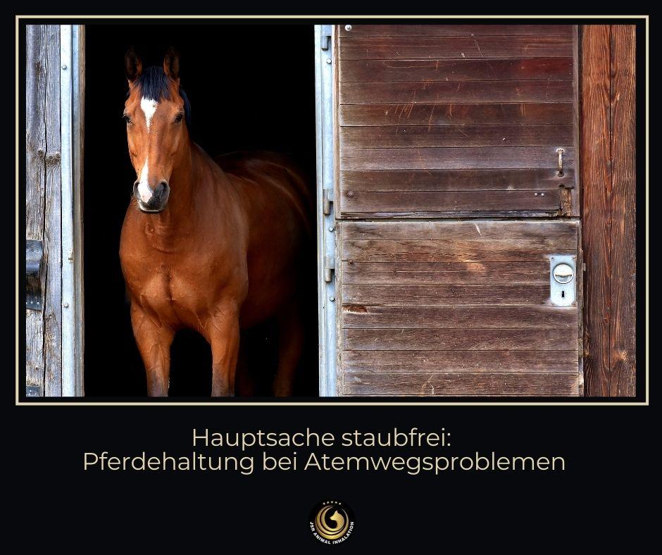 Tipps zur Haltung von atemwegserkrankten Pferden