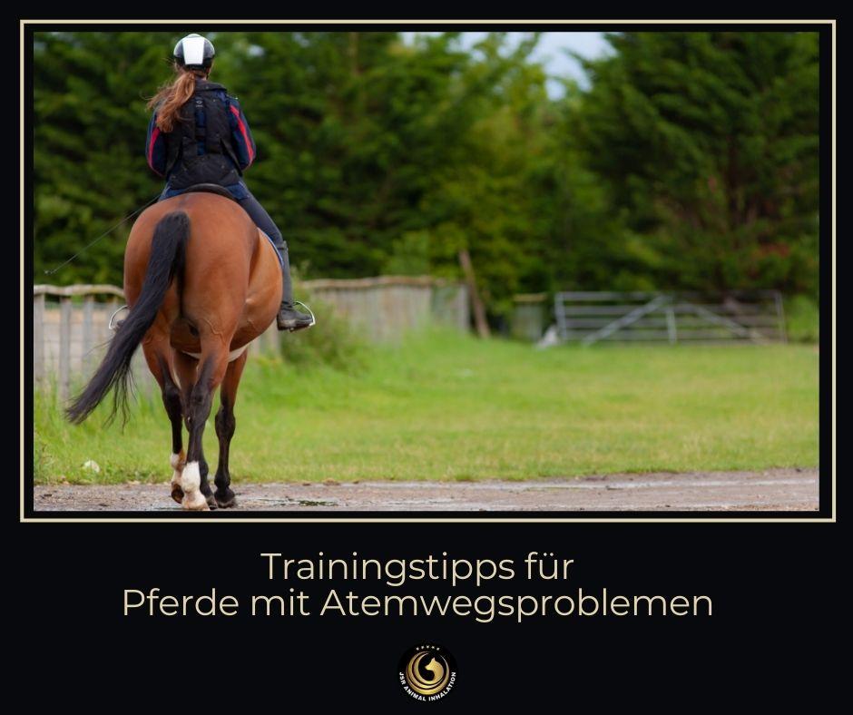 Trainingstipps für Pferde mit Atemwegsproblemen