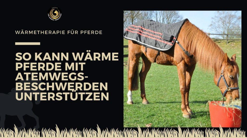 Wärmetherapie für Pferde