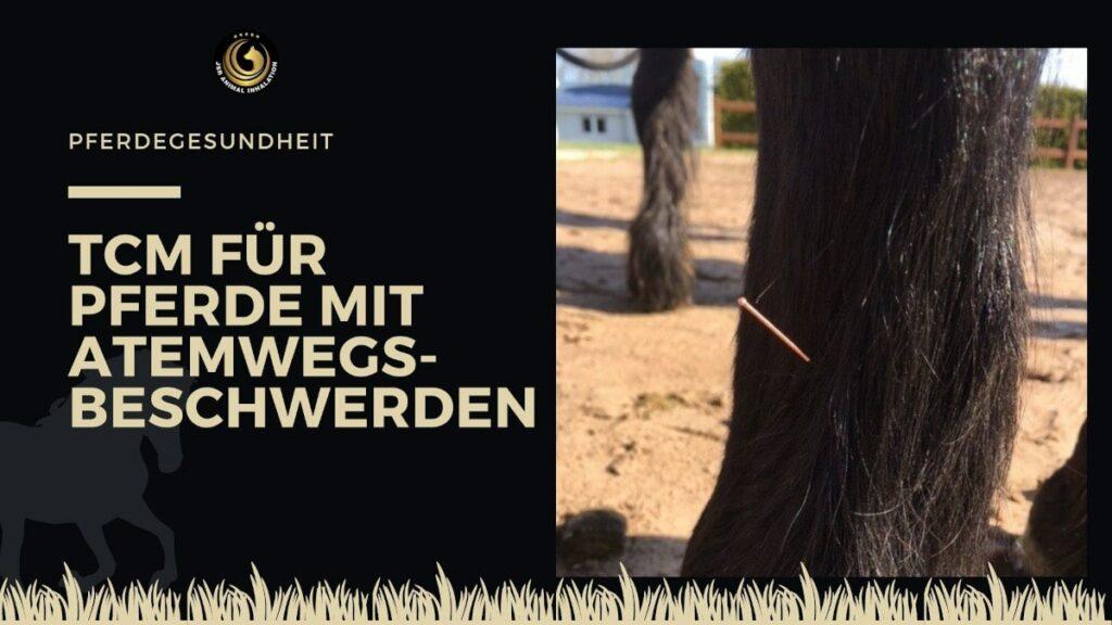 TCM Pferd Atemwegsbeschwerden Husten